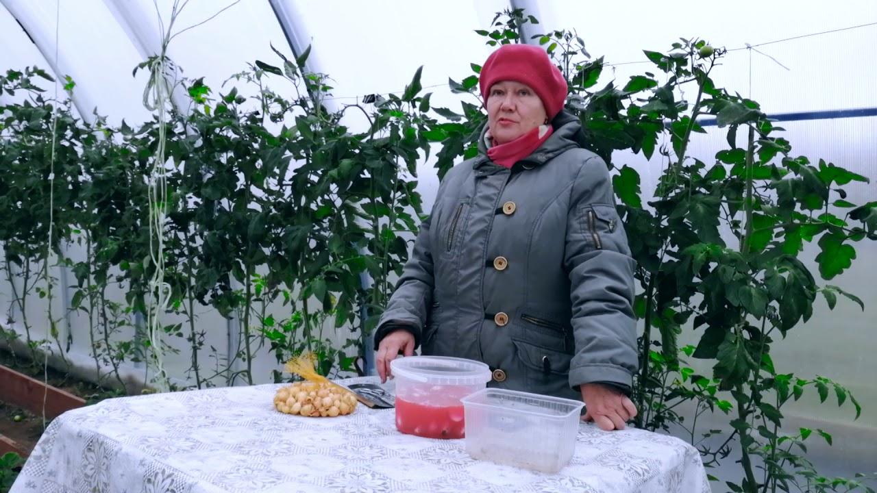Посадка чеснока на зиму. Озимый чеснок. Эксперимент с яровым чесноком.