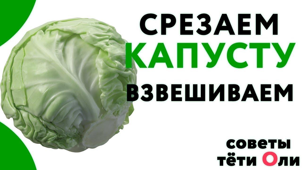 Выращивание капусты. Лучшие сорта.