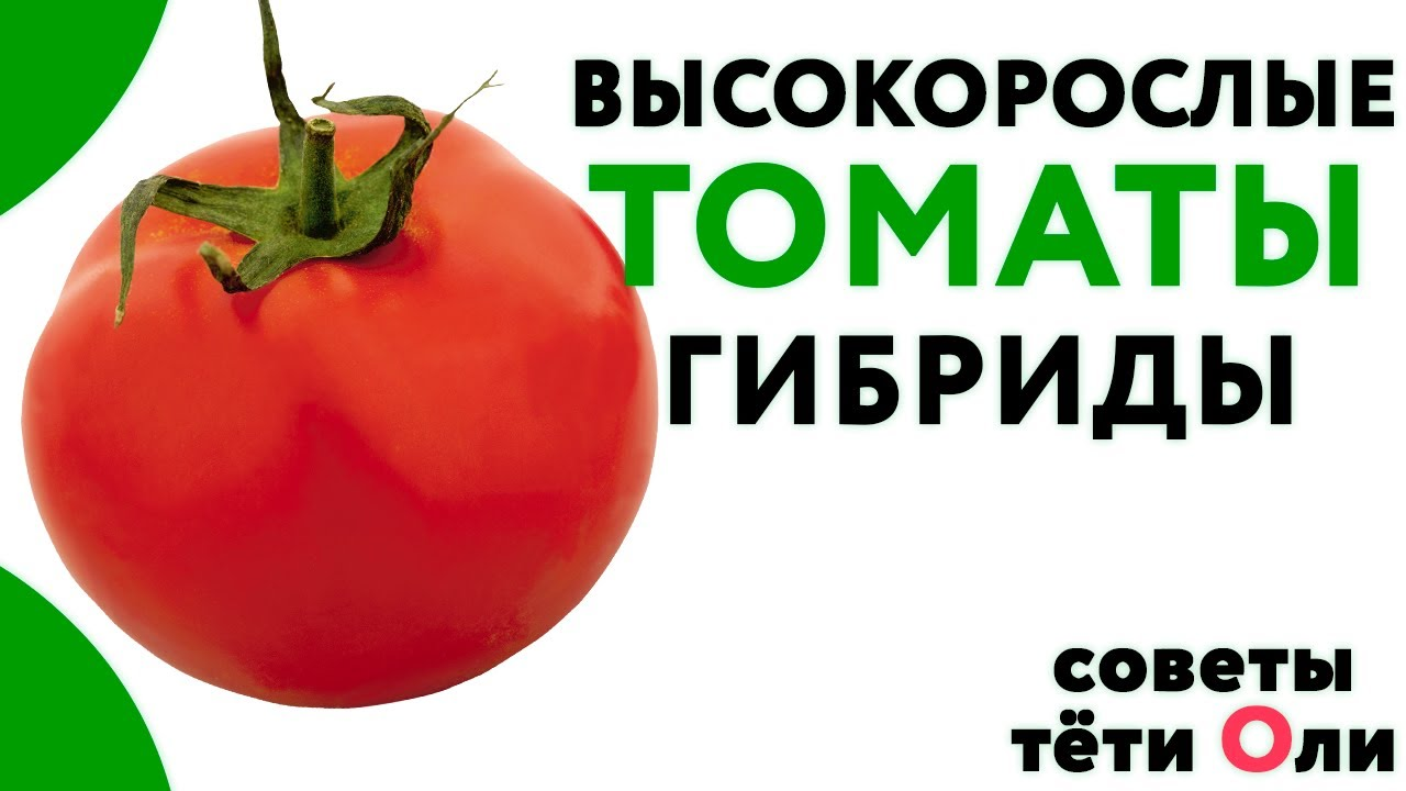 59325 Высокорослые томаты. Какие сорта сажать