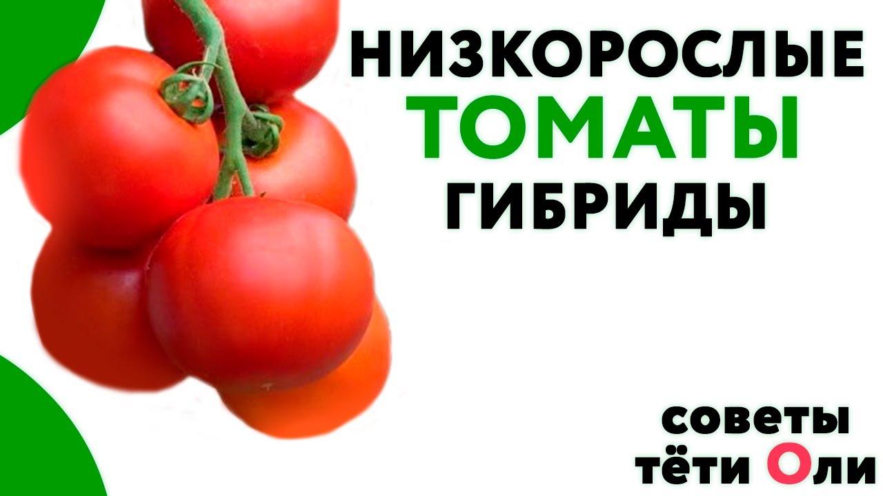59910 Низкорослые томаты. Какие сорта и гибриды сажать.