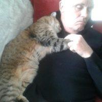 60196 Без кота в вашем доме пустота: милые снимки котиков