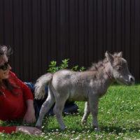61418 В это невозможно поверить: на свет появился самый маленький конь
