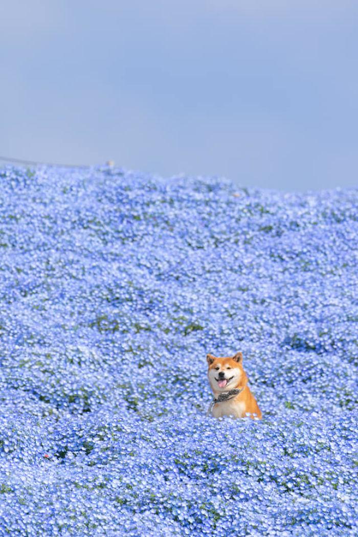 62354 Эти фотографии можно рассматривать вечно! Фотограф из Японии отлично передает всю красоту местного парка с помощью своей собаки