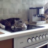 62327 Кот Никифор мало того, что разлегся на кухонной плите, так еще и огрызается