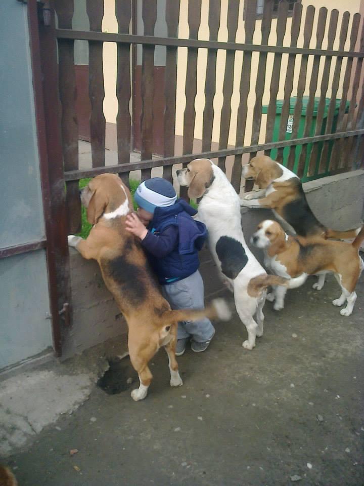 62384 Несколько доказательств тому, что собака — лучший друг ребенка