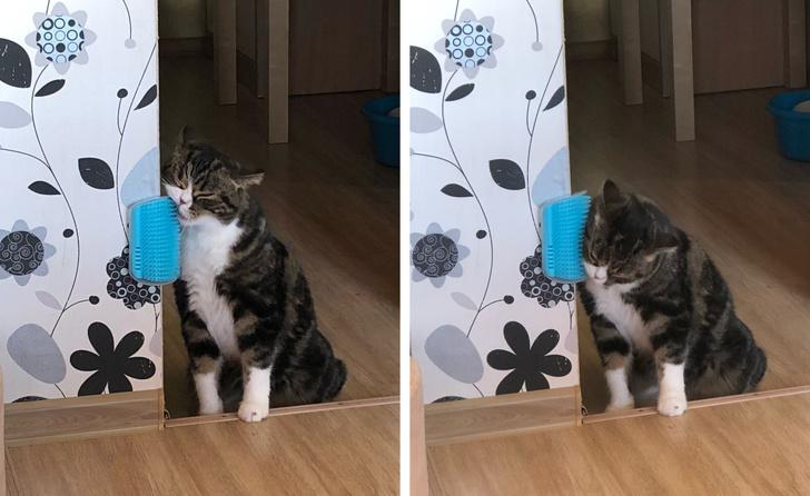 62547 Если у Вас в доме есть кошка, возьмите себе на заметку эти лайфхаки