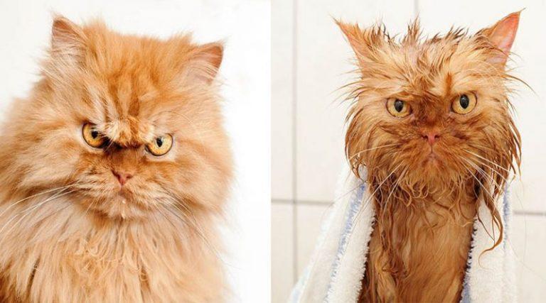 62659 Наши самые любимые домашние животные до и после купания. На некоторых без улыбки не взглянешь