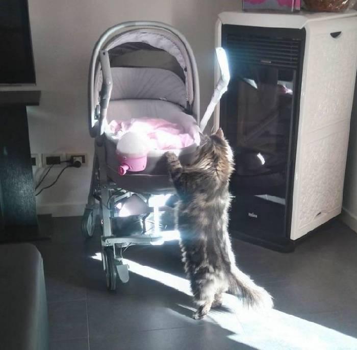 63083 Пушистый нянь: огромный кот прибился на ферму и стал настоящим другом для новорожденной малышки