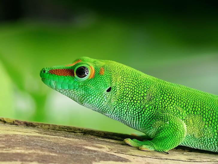 62851 Самые редкие животные в мире
