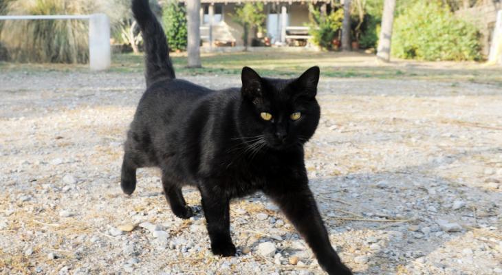 63593 Кошка стала приемной мамой для очень необычного детёныша