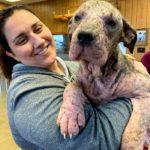 63210 Женщина забрала себе больную собаку, выходила и вылечила, теперь её просто не узнать