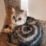 64819 Самые необычные окрасы котиков
