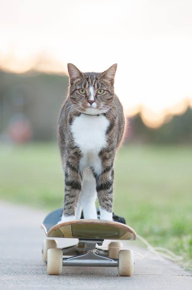 64898 Диджа, которою забрали из приюта, попала в книгу рекордов Гиннесса как самая умная кошка в мире!