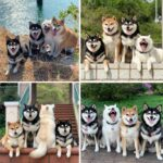 66424 Гарантия хорошего настроения: 12 фотографий самых милых и очень смешных собачек