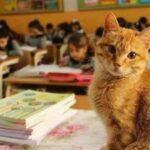 66327 Ученик 3-го класса, кот Томбо устроил настоящую забастовку, когда его не пустили в школу