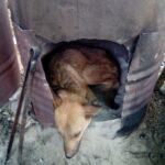 66685 Чтобы спасти раненого пса парень пошел в непроходимые горы