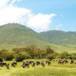 66573 Must see Танзании: 5 причин улететь на другой конец света
