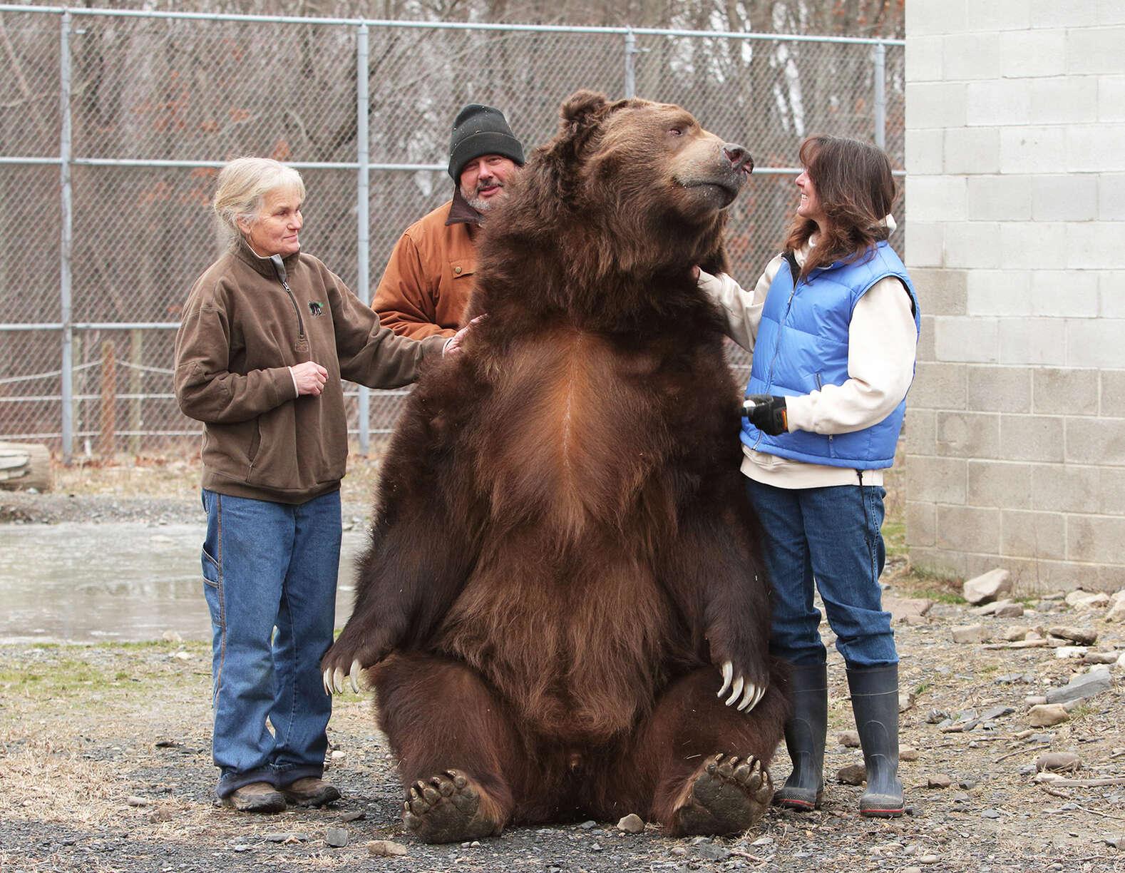 66799 Супружеская пара спасает медвежат-сирот и выхаживают их как собственных детей