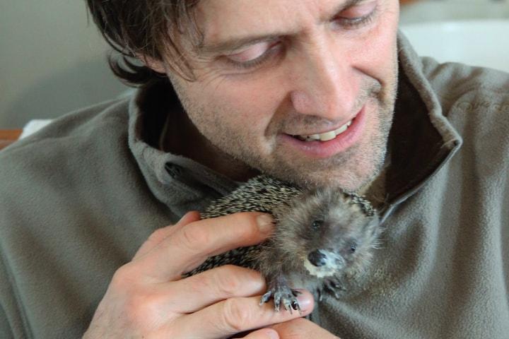 66600 Ветеринар спас крошечного ежонка, а тот изменил всю его жизнь