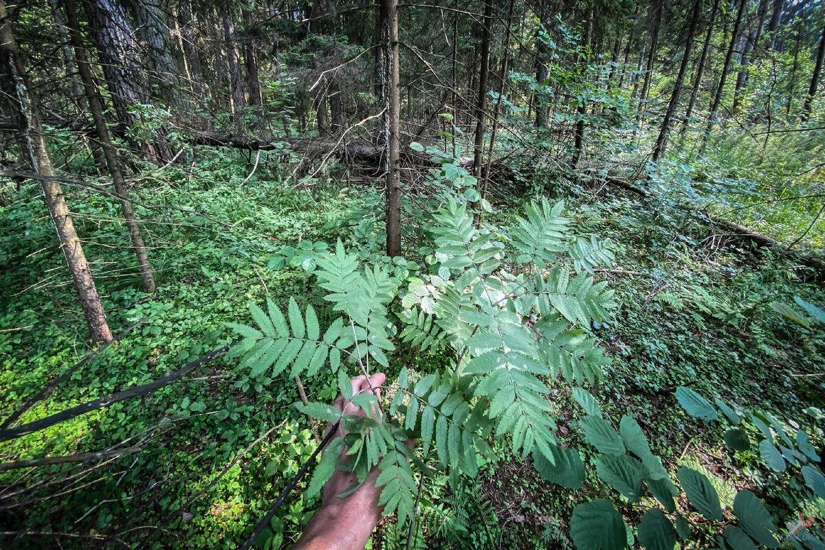 66977 Парни нашли в лесу загадочный стальной цилиндр и показали что там внутри